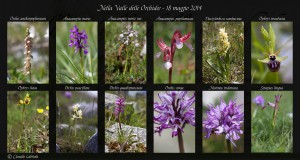 Raccolta di foto delle Orchidee fotografate durante il workshop del 18 maggio 2014