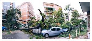 Danni nel Parco albero abbattuto dal violento temporale